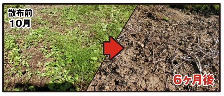 液体タイプ除草剤と粒剤タイプ除草剤の違いをお分かりですか。 - AXELショップ